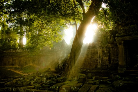 Mark Zastrow | tree and preah khan